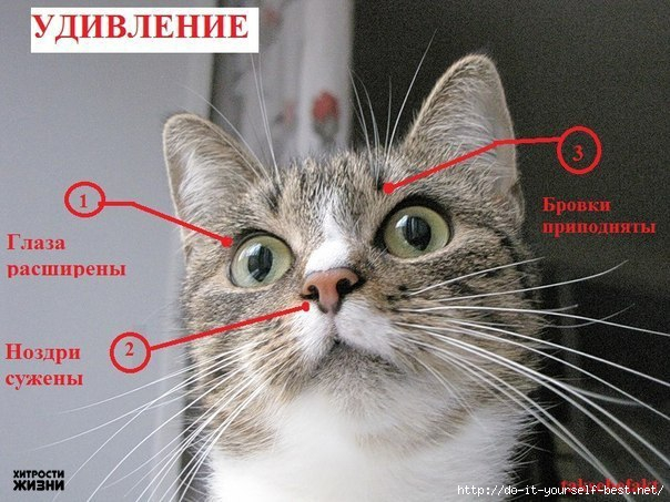 http://img0.liveinternet.ru/images/attach/c/7/96/380/96380292_large_v00Ce80qnM.jpg