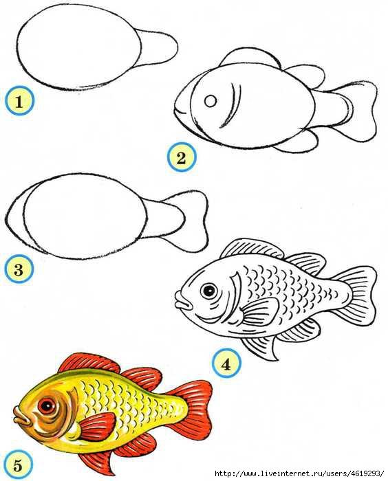 Рыбу рисовать по схеме