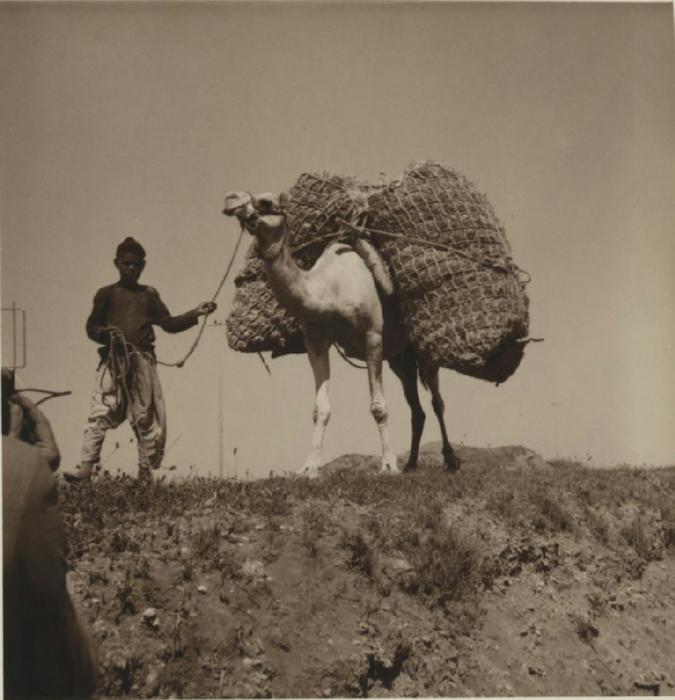10 Нагруженный верблюд с погонщиком в секторе Газа. 3 июля (675x700, 286Kb)