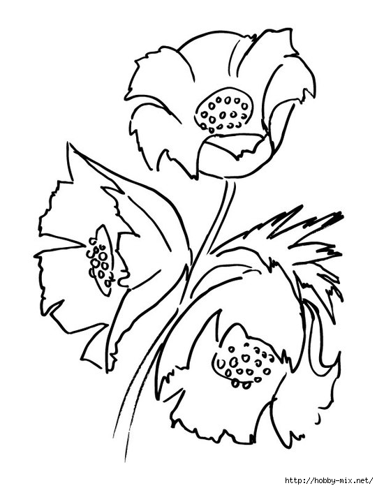 poppy-flower-bouquet-coloring-page (540x700, 123Kb)