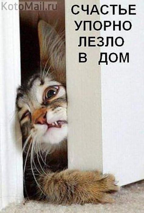 http://img0.liveinternet.ru/images/attach/c/7/97/943/97943866_20131802130839.jpg