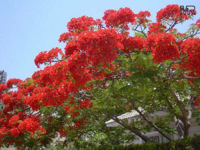 Растения, на которых растут фрукты - Бугага 20
