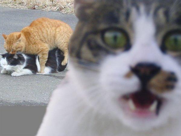 Секс коты фото