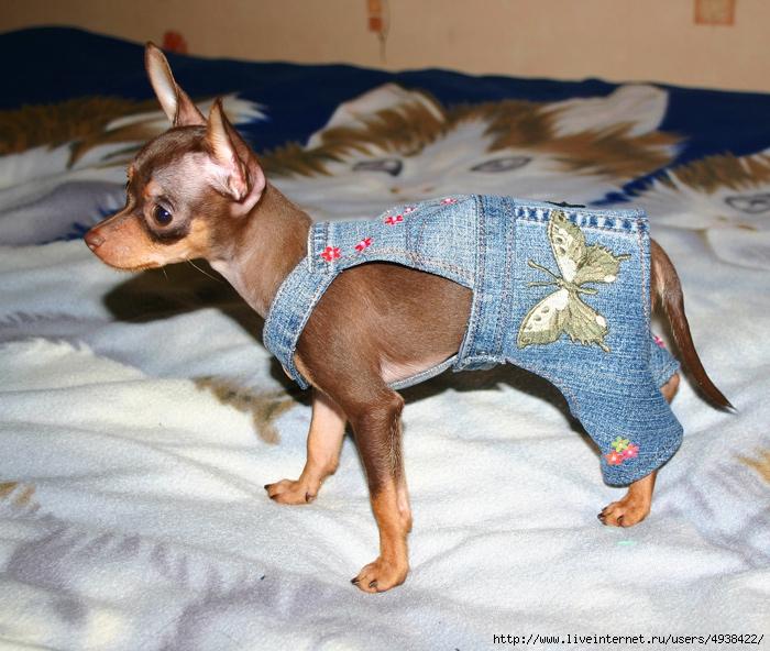 схема вязания для собаки штанишек