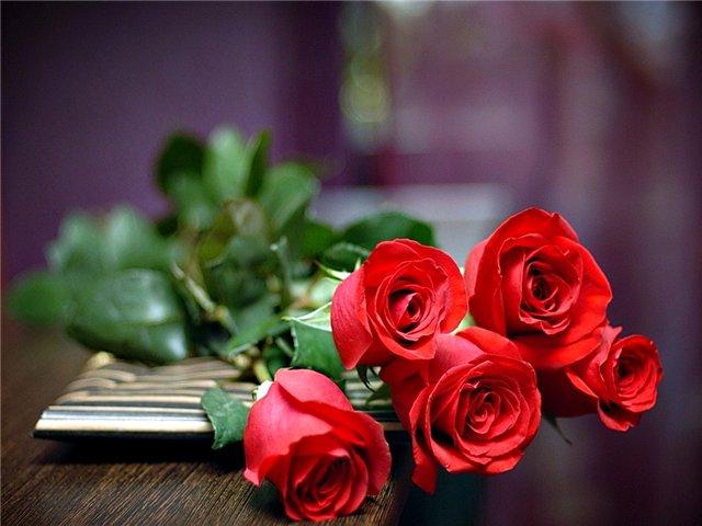 Обои розы на рабочий стол 1920х1080