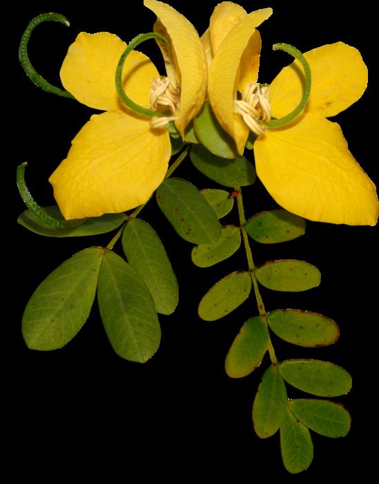 1368209731_ditab_flower1ash (549x700, 364Kb)