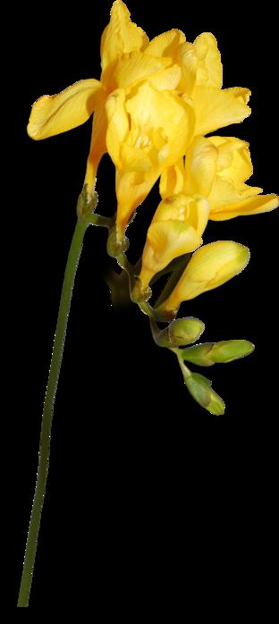 1368210461_ditab_flower6sh (312x700, 150Kb)