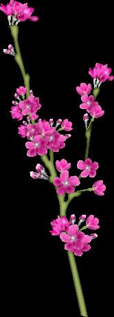 1368216127_blossom2 (166x459, 55Kb)