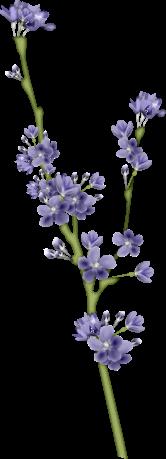 1368216141_blossom3 (166x459, 53Kb)