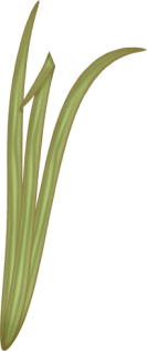 1368217432_grass1 (133x317, 24Kb)