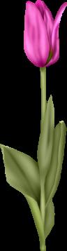 1368218202_tulip6 (96x358, 28Kb)