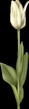 1368218230_tulip8 (96x358, 27Kb)