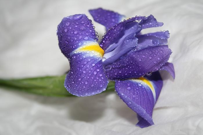 Для тамары, картинки поздравления семена с днем рождения