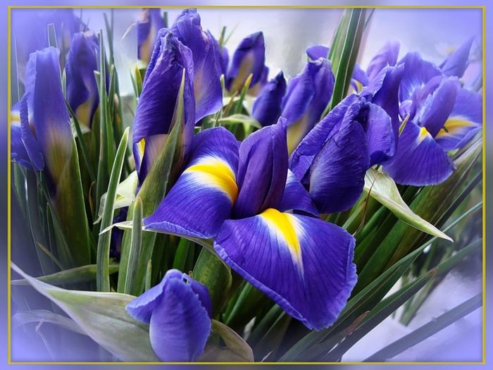 Открытки с днем рождения женщине с цветами ирисы