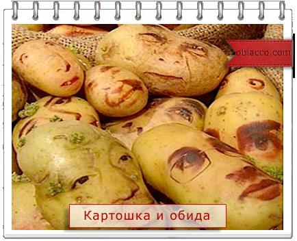 3518263_kartoshka (434x352, 275Kb)
