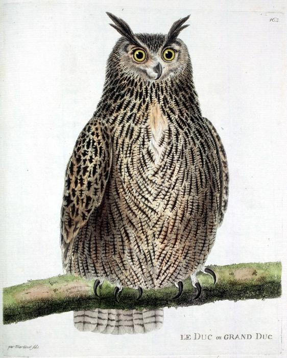 винтажные птицы. картинки для декупажа (5) (562x700, 321Kb)