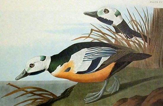 винтажные птицы. картинки для декупажа (9) (550x358, 171Kb)