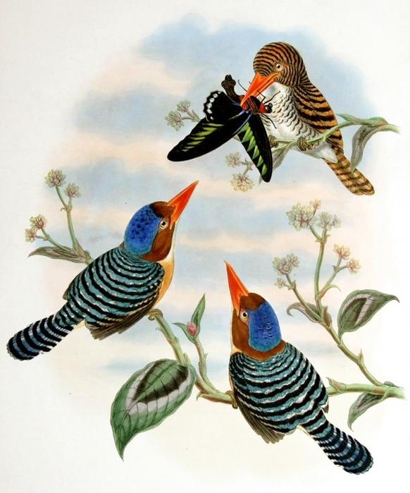 винтажные птицы. картинки для декупажа (17) (582x700, 279Kb)