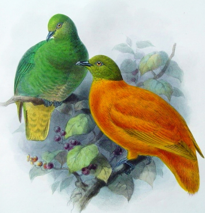 винтажные птицы. картинки для декупажа (19) (673x700, 301Kb)