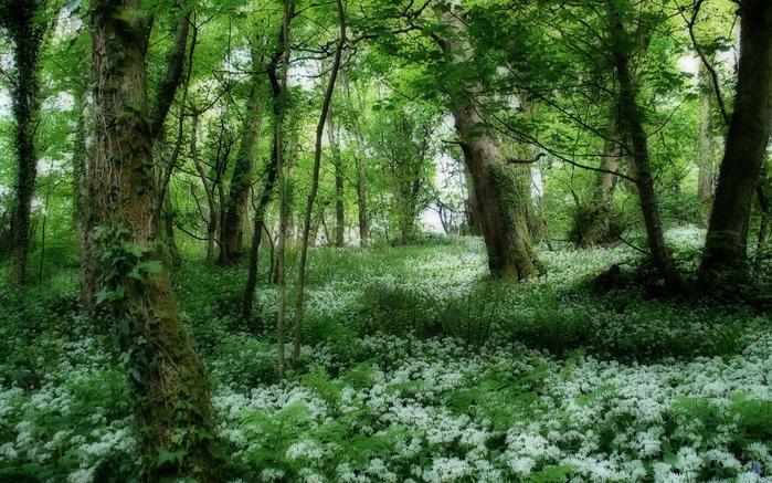 На лесной поляне zapovednyiles_1440x900 (700x437, 91Kb)
