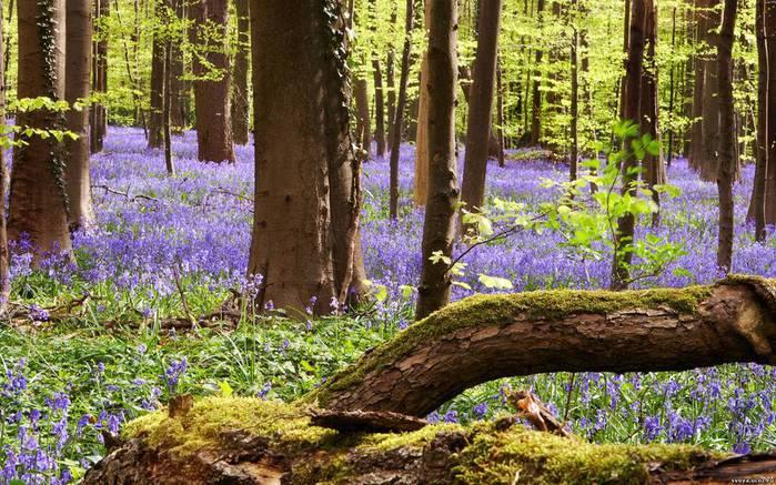 На лесной поляне 1298732276_svoya_ucoz_ru_spring2011_wide (700x437, 95Kb)