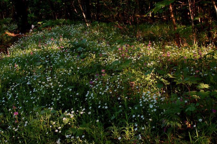На лесной поляне 86314 (700x465, 125Kb)