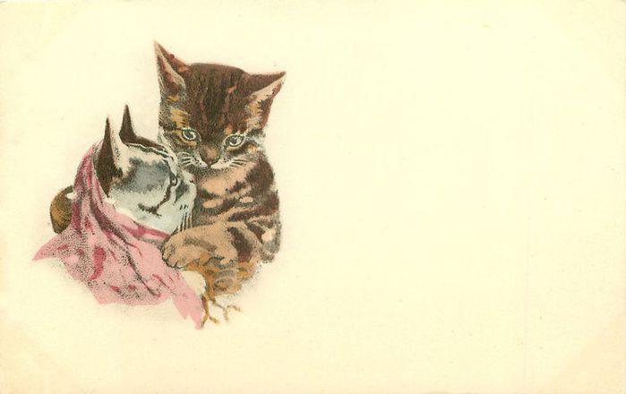 почтовые открытки кошка самый большой архив
