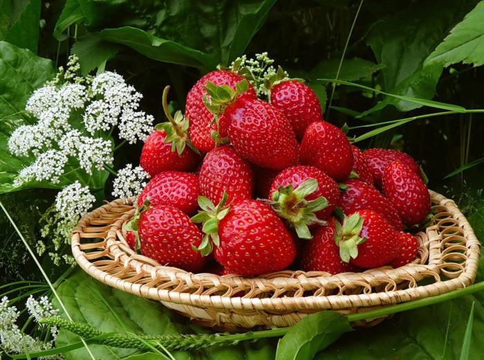 Натюрморты цветочно - фруктовые 75582090_large_kl3 (700x520, 154Kb)
