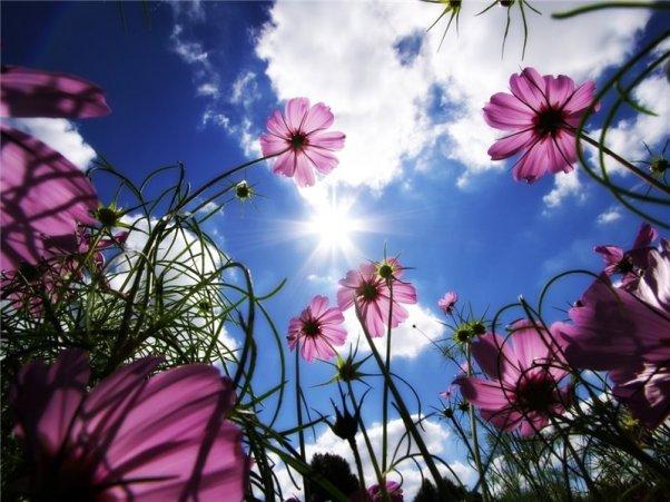 Полевые цветы на рассвете 50