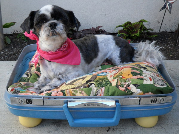 recycled-suitcase-ideas-pets-bed4 (600x450, 115Kb)