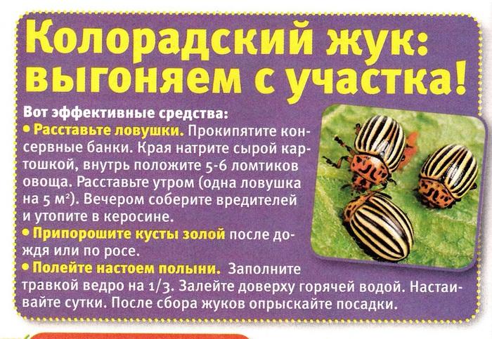 вредители комнатных растений 102343440_4085248_Na_dache3