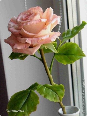 Розы из холодного фарфора и как сделать молды для лепки листьев (22) (360x480, 82Kb)
