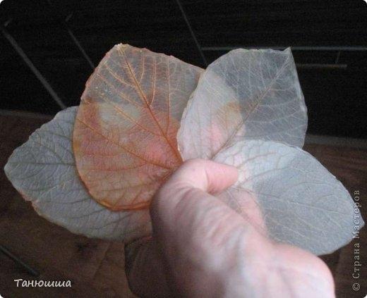 Розы из холодного фарфора и как сделать молды для лепки листьев (24) (520x423, 95Kb)