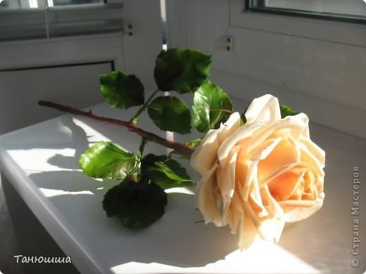 Розы из холодного фарфора и как сделать молды для лепки листьев (26) (520x390, 86Kb)