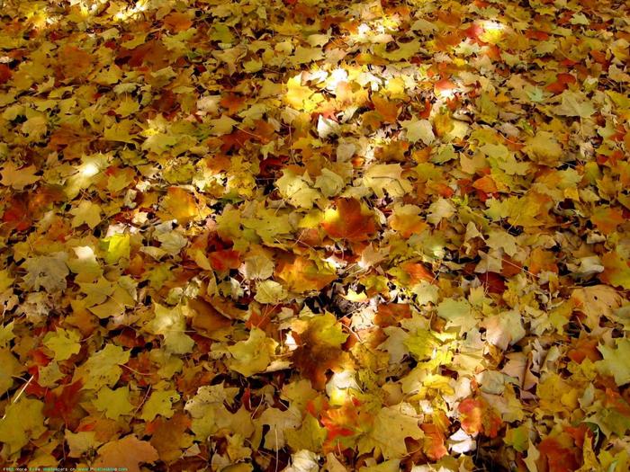 картинки земля покрытая осенними листьями вообще, самом