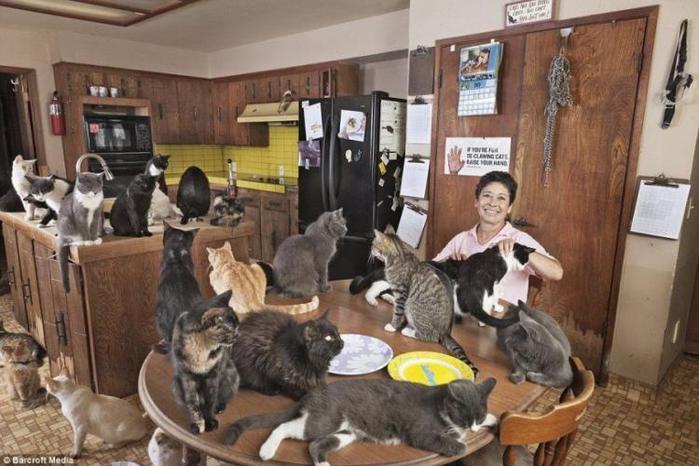 http://img0.liveinternet.ru/images/attach/c/8/99/244/99244548_large_Cats_House_01.jpg