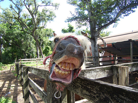 horse_laugh_by_jodimarr (450x338, 276Kb)