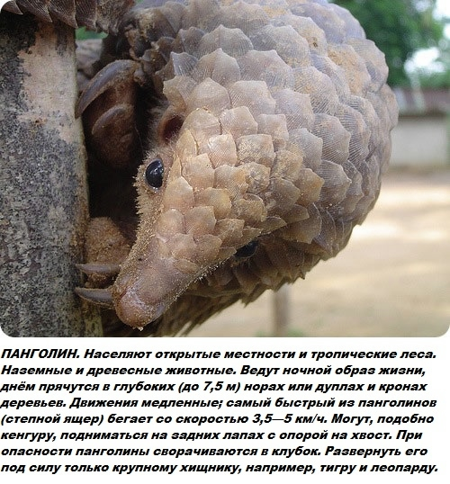 Необычные животные мира фото с названиями и описанием