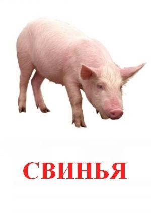 Свинья картинка с надписью