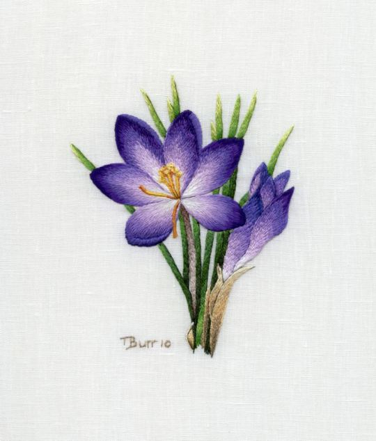 1308996327_purple-crocus (540x634, 41Kb)