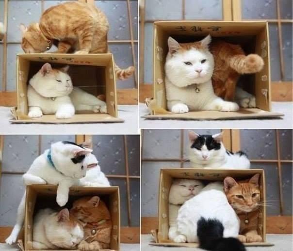 кошки коробка широнеку/3518263_ponedelniek (604x518, 39Kb)