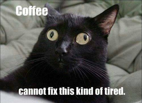 кофе кошки осень