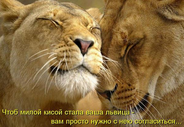 https://img0.liveinternet.ru/images/attach/c/9/107/184/107184716_large_matrica17.jpg