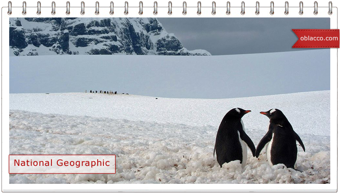 Лучшие фотографии недели от National Geographic 11.11.2013 - 17.11.2013