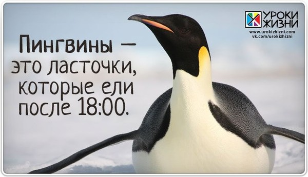 родные, доброе утро картинки пингвины известен