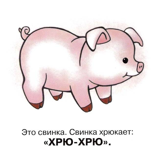 Свинья картинка с надписью, открытку английскому