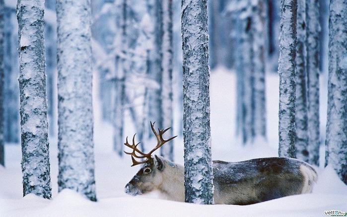 Картинки по запросу Русская зима