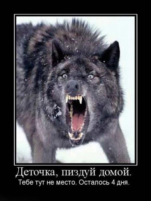 итоге демотиваторов про бешеного волка словам сотрудников