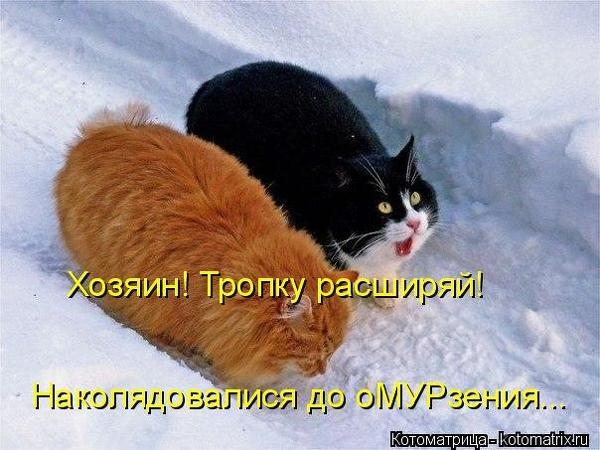 Котоматрица коты дармоеды фото заинском
