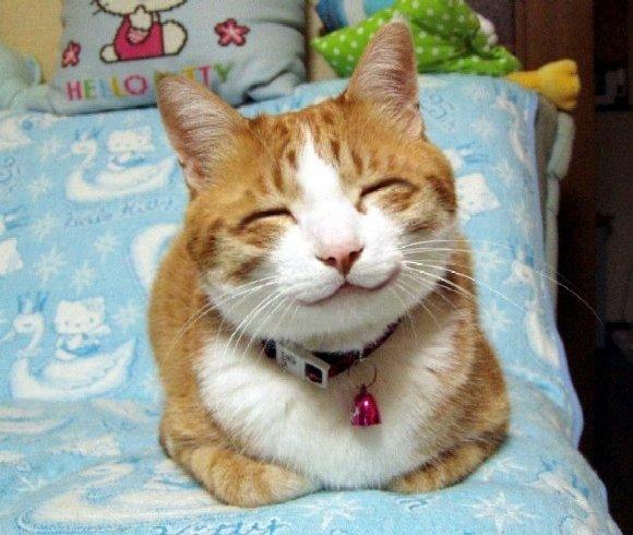 смотреть смешные кошки фото